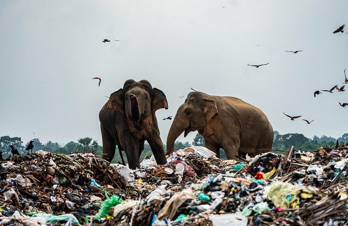 elefanti-discarica5