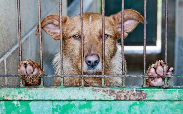 La Cina ai tempi del coronavirus: parte da Shenzhen il divieto di mangiare cani e gatti